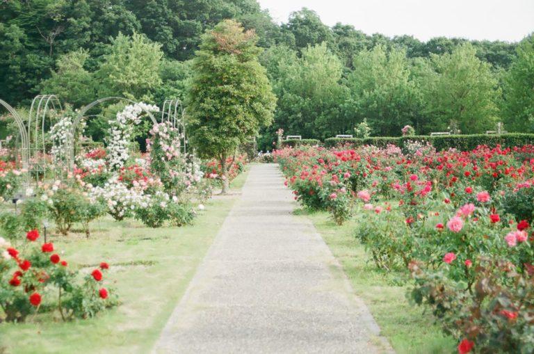 Każdy dom powinien mieć odpowiednio zaprojektowany ogród