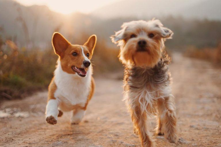 O czym należy wiedzieć decydując się na zakup mokrej karmy dla psów
